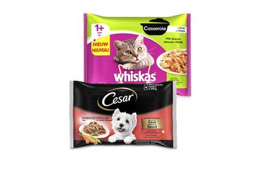 Cesar Pouch of Whiskas Casserole